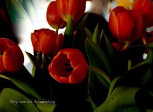 Tulipani firma